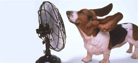 do dogs sweat glands understanding sweating in dogs pets world