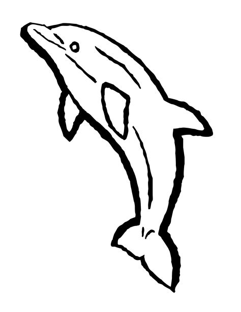 coloring page of bottlenose dolphin bottlenose dolphin coloring pages download free