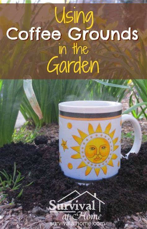 Coffee Grounds In Garden by Best 25 Coffee Grounds Garden Ideas On
