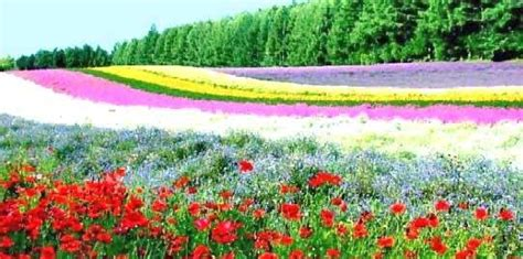Best Flowers In The World Best Flower Garden Best Flowers For The Garden