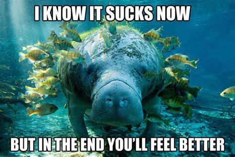 Manatee Meme - calming manatee