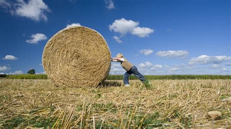 what is the what is the size of a standard hay bale reference com