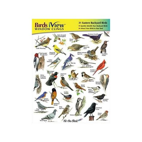 Backyard Bird Identification by Birds Iview Window Clings Backyard Birds Identification