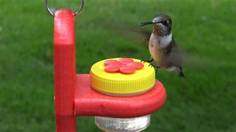 hanging dots nectar dots hummingbird feeder youtube