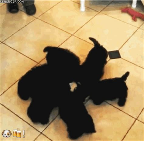 puppy pinwheel spinning gif by cheezburger find on giphy
