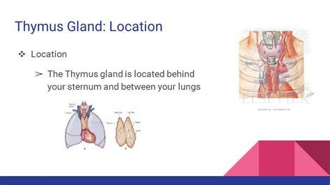 Thymus Function