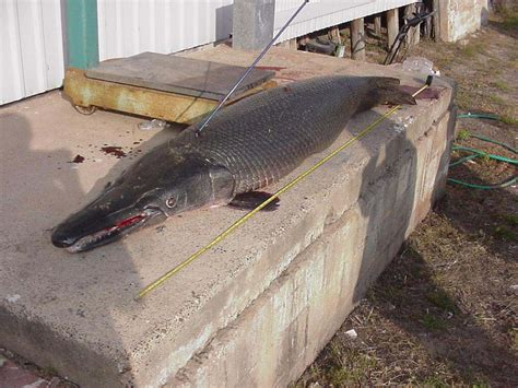 boats for sale in zapata tx texas fishing report from anglers for 2004