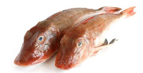 cucinare la gallinella gallinella o lucerna mercato ittico chioggia chioggiapesca
