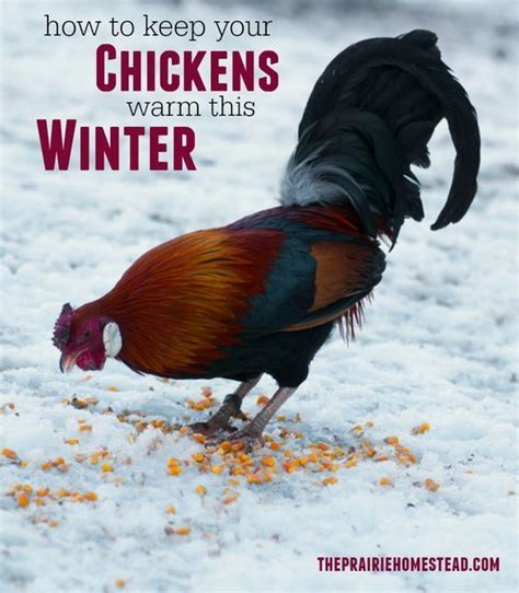 17 Best Images About Backyard Chickens On Pinterest Backyard Chickens Winter