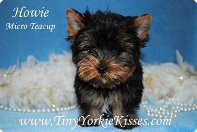 tiny yorkie kisses reviews tiny yorkie kisses pet services fairfield ca yelp