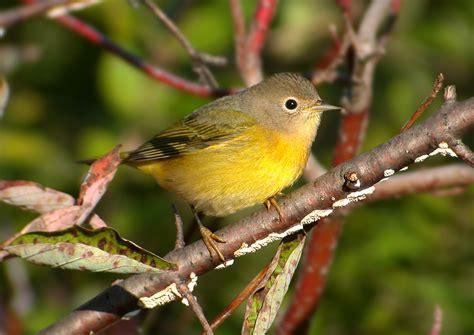 small birds agile