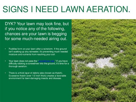 lawn aeration lawn fertilizing tips for homeowners