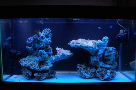 Marine Aquarium Aquascaping by Show Your Island Style Aquascape Reef Central