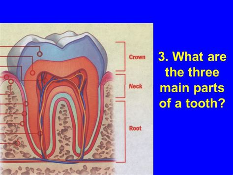 what are the three main sections of the brain guided reading activity 51 care of teeth and mouth ppt