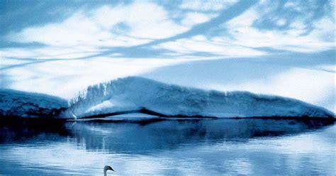 wallpaper burung angsa  pemandangan alam keren