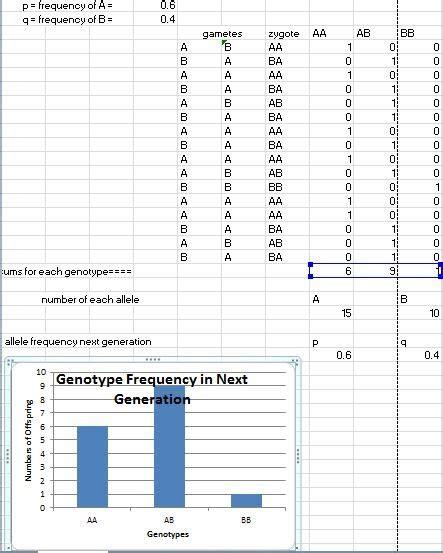 mathematical modeling hardy weinberg ap bio gabrielle