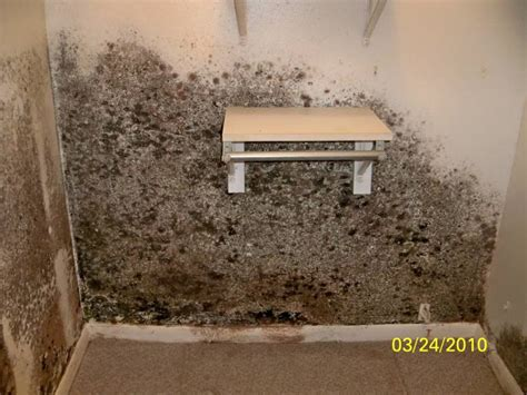 Black Mold In Closet by Black Mold On Walls In Closet 02 Restoration Services