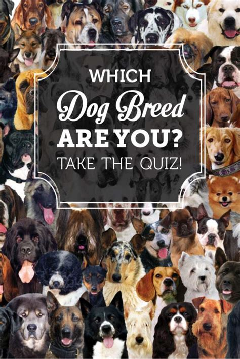 which is right for me quiz breed quiz what breed is right for me homesteading simple self sufficient