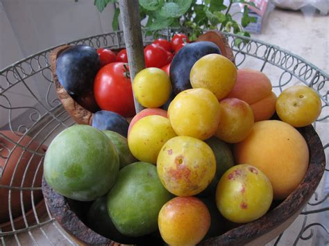 Which Ones Are Fall Fruits by In Season Now Late Summer Edition One Expat S