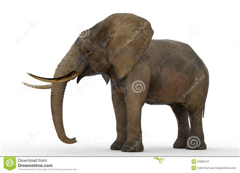 Elephant Stock Image - Image: 34968751