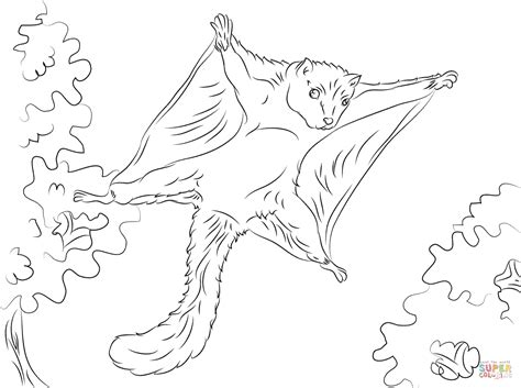 cute flying squirrel coloring page free printable