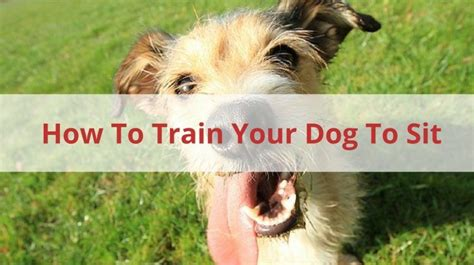 how to train your dog to go to the bathroom pet sitters ireland pet sitter dog walker cat sitter