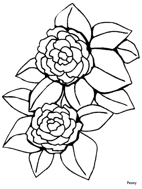 types of flowers coloring pages disegno fiori numero 68 da stare e colorare