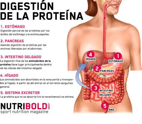 que proteina es mejor prote 237 nas vs amino 225 cidos 191 es mejor consumir prote 237 na o