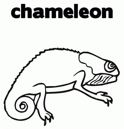 chameleon coloring page pdf chameleon coloring pages 285 free printable coloring