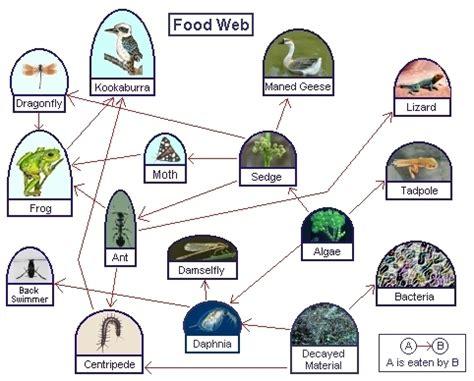 food web generator free thefoodchain sle food chains
