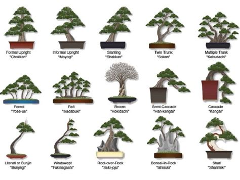type of tree the 25 best ideas about bonsai tree types on