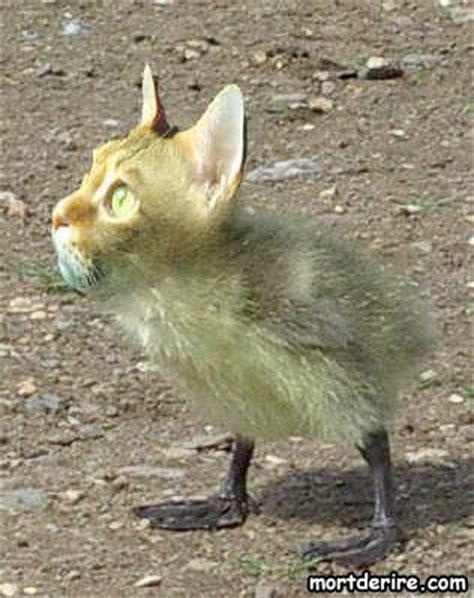 imagenes de animales raros y deformes animaux bizarre page 3