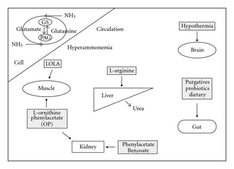 How To Detox Ammonia From Brain by Management Of Hepatic Encephalopathy Figure 1