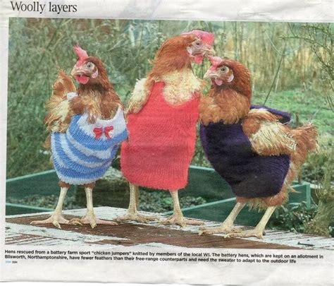 Pin By Pam An David Walden On Chicken Coats Jackets Exc