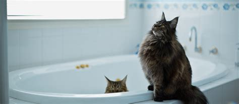 why are cats so obsessed with bathrooms