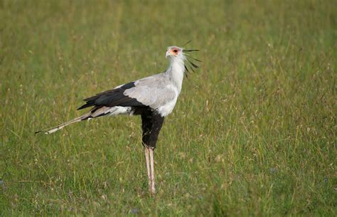 birding serengeti np birds of serengeti national park