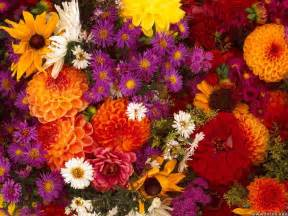 fall flowers wallpapers spring flowers background