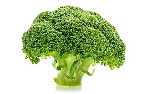 broccolo a testa ingrediente broccoli le ricette dello spicchio d aglio
