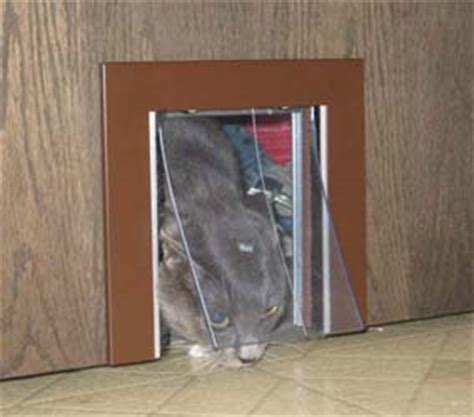 Cat Doors For Interior Doors by Pet Pass Thru Small Pet Door For Interior Doors
