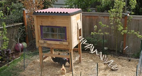 raising backyard chickens raising backyard chickens for dummies