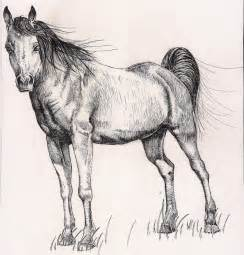 Horse drawing by rhyshaug on deviantart