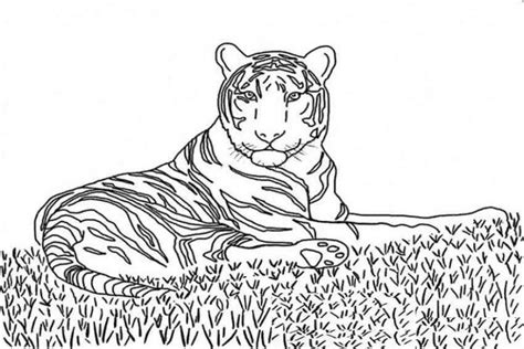 easy tiger coloring pages easy tiger face coloring pages