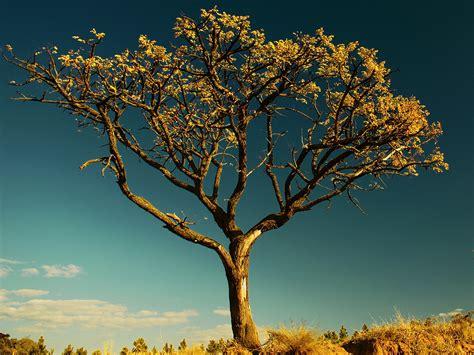 living tree haggard halloo publications