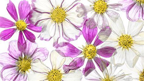 Blume Mit Weißer Blüte by Die 61 Besten Hintergrundbilder Blumen