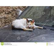 Homeless Cat In The City Of Sousse Sleeping On Hood