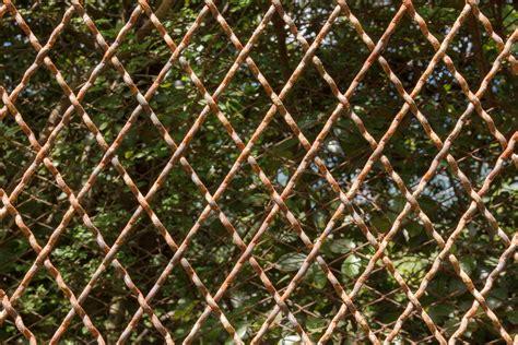fence pattern photography fotos gratis 225 rbol rama cerca estructura planta