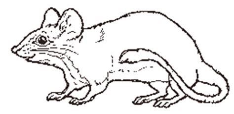 coloring pages for the mitten by jan brett the mouse coloring page