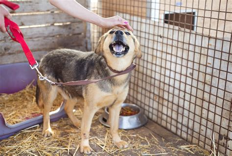 local pound 6 simple ways to help out your local animal shelter alliance for homeless pets