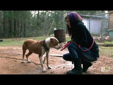 pitbulls and parolees dogs tania leads the rescue to save ten dogs pit bulls and parolees