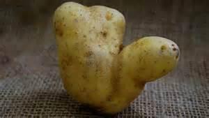 potato advent calendar raises spud variety awareness on